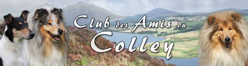 club des amis du colley collie smooth rough